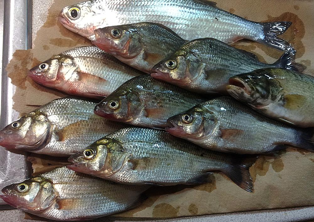 Pêche de semaine